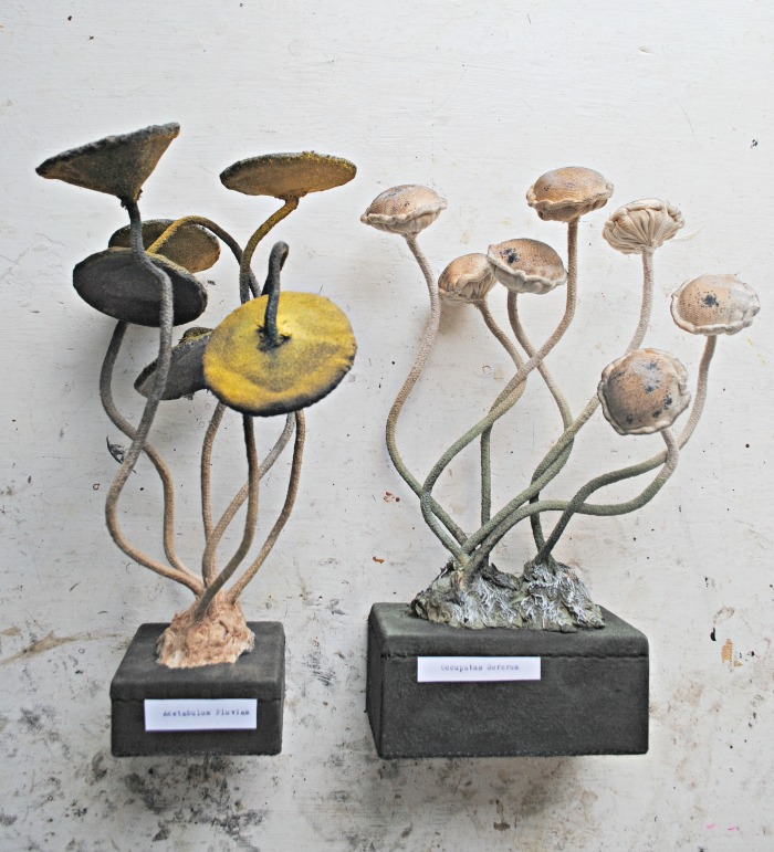 toadstools-on-base-small-5